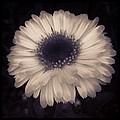 Flower by Tammie Jones