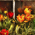 Flower - Tulip - Tulips In A Window by Mike Savad