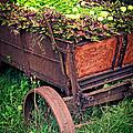 Flower Wagon by Edward Fielding