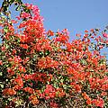 flower wall in Madagascar by Rudi Prott
