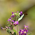 Flower With Bee by Allen Sheffield