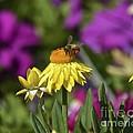 Flower With Company by Carol  Bradley