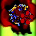 Flower With'in by Kathy Sampson