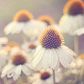 Flowerchild by Amy Tyler