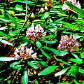 Flowered Tree by Chuck  Hicks