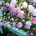 Flowering Almond by Jean Hall