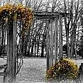 Flowering Archway by Tara Potts