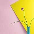 Flowering Chive Blossom by Juj Winn