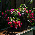Flowering Coffee Pot by Jordan Blackstone