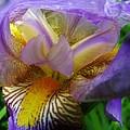 Flowering Iris by Sherman Perry