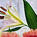 Flowering by Lisa Byrne