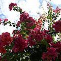 Flowering Skyward by William Hallett