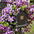 Flowering Vine  by Ann Murphy