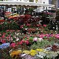 Flowermarket - Tours by Christiane Schulze Art And Photography