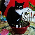 Flowerpot Cat by Thomas  McGuire