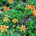 Flowers 2 by Dietrich ralph  Katz