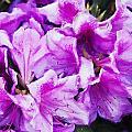 Flowers 2078 Neo by David Lange