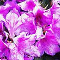 Flowers 2078 Oil Hp by David Lange