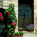 Flowers 4-assisi by Theresa Ramos-DuVon