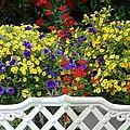Flowers 53 by Joyce StJames