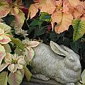 Flowers 555 by Joyce StJames