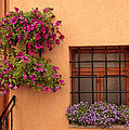 Flowers And A Window by Uri Baruch