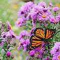Flowers And Butterfly  by Susan McMenamin