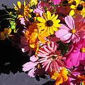 Flowers And Shadow by Tina M Wenger