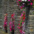 Flowers At Liscannor Rock Shop by James Truett