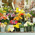 Flowers At The Bi-rite Market In San Francisco  by Artist and Photographer Laura Wrede