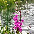 Flowers At The Lake by Kate Brown