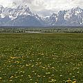Flowers Before The Tetons by Eric Cross