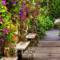 Flowers By A Bench  by Larry Braun