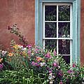 Flowers By The Window by Nikolyn McDonald