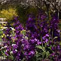Flowers Dallas Arboretum V18 by Douglas Barnard