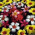 Flowers Floating by Mark Sullivan