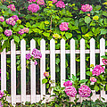 Flowers - Floral - White Picket Fence by Gary Heller