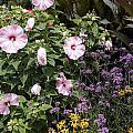 Flowers In A Garden by Jason O Watson