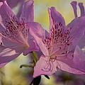 Flowers In Bloom by James DeFazio