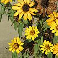 Flowers In Fall 2 by Anita Burgermeister