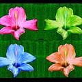 Flowers In Ireland by Bruce Nutting