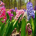 Flowers In Michigan  by John McGraw