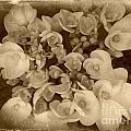 Flowers In Sepia by Miriam Danar