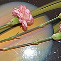 Flowers In Space by Sonali Gangane