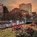 Flowers In The City by Robin-Lee Vieira