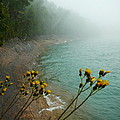 Flowers In The Fog by Two Bridges North