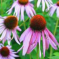 Flowers by Lisa Alex