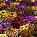 Flowers Near The Grand Palais Off Of Champ Elysees In Paris France   by Richard Rosenshein