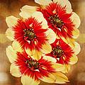 Flowers Of Flowers by Angela Stanton