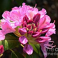 Flowers Of Spring by Cindy Manero